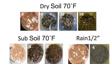 "Urea placed on dry soil, Top row: dry soil no water added, Bottom left, moisture added from subsurface, Bottom right : simulated rain fall event of 1/2"". White text is the number of hours after application."