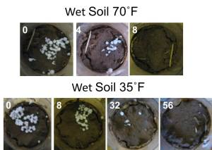 Urea placed on the surface of a wet soil under two temperature regimes. White text is the number of hours after application.
